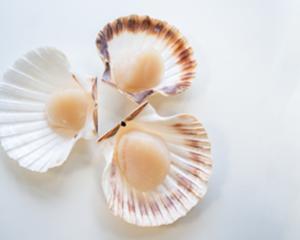 Schaal-en Schelpdieren - Sashimi